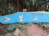 加里山賞一葉蘭:IMG_4271.jpg
