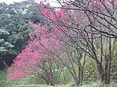 南勢角山的花草:IMG_2810.jpg