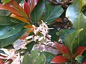 植物隨拍:IMG_4411.jpg