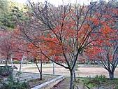 武陵楓正紅:IMG_1583.jpg