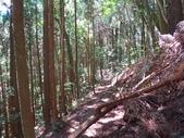 高台山縱走島田三山:IMG_1942.jpg