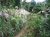 小烏來登赫威山、赫威前峰、木屋遺址、赫威神木群:IMG_5032.jpg