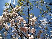 春之花海-武陵賞櫻(1):IMG_6541.jpg
