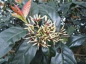 植物隨拍:IMG_3697.jpg