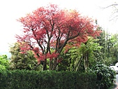 植物隨拍:IMG_3395.jpg