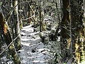 雪蓋復興尖、冰封塔曼山:IMG_2494.jpg