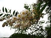 三星山、太平山森林遊樂區:IMG_2570.jpg