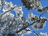 雪蓋復興尖、冰封塔曼山:IMG_2515.jpg