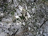 雪蓋復興尖、冰封塔曼山:IMG_2474.jpg