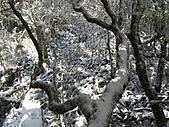 雪蓋復興尖、冰封塔曼山:IMG_2517.jpg