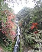 武陵楓正紅:IMG_1630.jpg