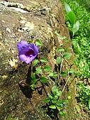 獅公髻尾山:IMG_8067.jpg
