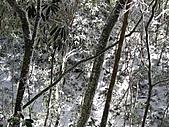 雪蓋復興尖、冰封塔曼山:IMG_2495.jpg