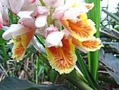 植物隨拍:IMG_3699.jpg
