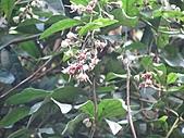 南勢角山的花草:IMG_2815.jpg