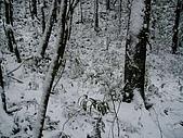 北插雪景:P3050069
