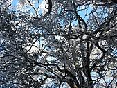 雪蓋復興尖、冰封塔曼山:IMG_2518.jpg