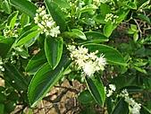 植物隨拍:IMG_4403.jpg