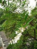 三星山、太平山森林遊樂區:IMG_2571.jpg