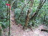 小烏來登赫威山、赫威前峰、木屋遺址、赫威神木群:IMG_5035.jpg