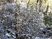 雪蓋復興尖、冰封塔曼山:IMG_2476.jpg
