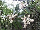 植物隨拍:IMG_3402.jpg