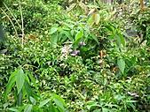 植物隨拍:IMG_4168.jpg