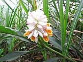 植物隨拍:IMG_3700.jpg