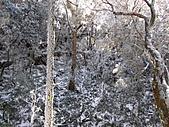 雪蓋復興尖、冰封塔曼山:IMG_2520.jpg