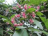 南勢角山的花草:IMG_2820.jpg