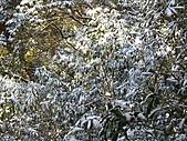 雪蓋復興尖、冰封塔曼山:IMG_2477.jpg