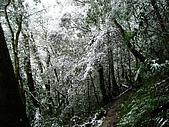 北插雪景:P3050061