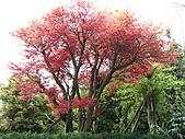 植物隨拍:IMG_3396.jpg