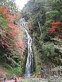 武陵楓正紅:IMG_1631.jpg