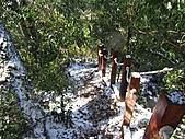 雪蓋復興尖、冰封塔曼山:IMG_2447.jpg