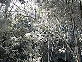 雪蓋復興尖、冰封塔曼山:IMG_2521.jpg