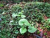 太平山四月植物篇:IMG_2893.jpg