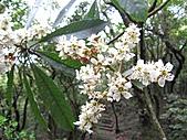 植物隨拍:IMG_3403.jpg