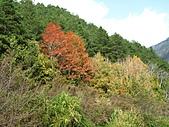 武陵楓正紅:IMG_1657.jpg