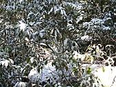 雪蓋復興尖、冰封塔曼山:IMG_2478.jpg