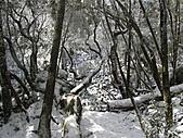 雪蓋復興尖、冰封塔曼山:IMG_2522.jpg