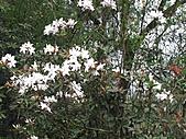 植物隨拍:IMG_3701.jpg