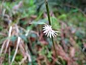 太平山四月植物篇:IMG_2882.jpg