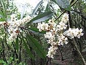 植物隨拍:IMG_3404.jpg