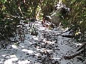 雪蓋復興尖、冰封塔曼山:IMG_2449.jpg