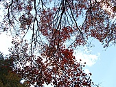 武陵楓正紅:IMG_1597.jpg