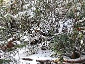 雪蓋復興尖、冰封塔曼山:IMG_2479.jpg