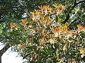 植物隨拍:IMG_4452.jpg