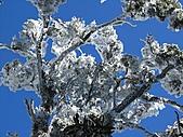 雪蓋復興尖、冰封塔曼山:IMG_2524.jpg