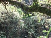 宜蘭大同鄉九寮溪生態步道:IMG_6930.jpg